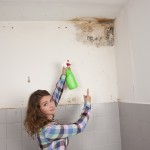 San Carlos-Mold-Remediation
