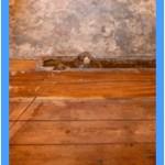 Wall-Mold-Removal-San Carlos